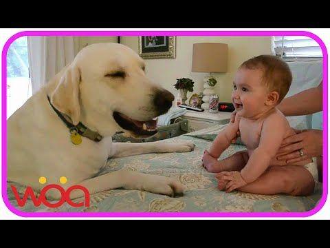 In questo video vedrete una compilation che ha come protagonisti dei bambini e dei cani di razza Labrador.Le immagini che seguono sono davvero molto belle, e per alcuni