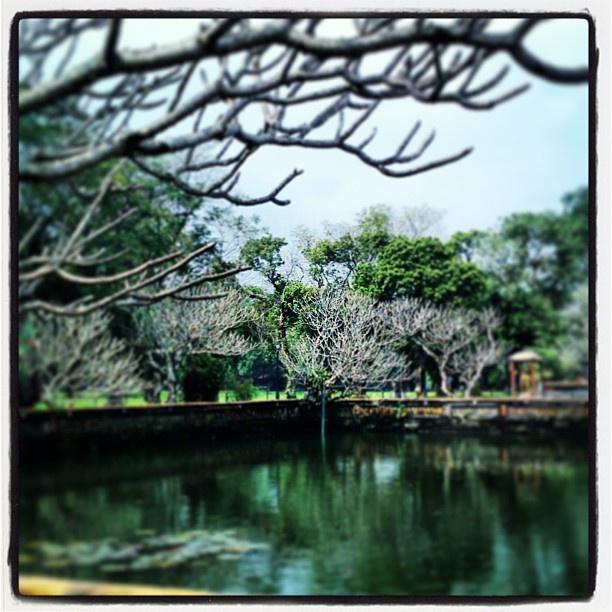 Vielverzweigt... Somewhere in #Asia #pic #instapic #instatravel #vietnam #nature #travelling #urlaub #asien