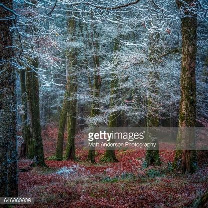 Bildbanksbilder : Scottish forest