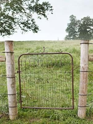 Have three of these gates now that the ugly fence around the farmhouse is down...looking for ideas....?wrapped trellis around the baby willows?