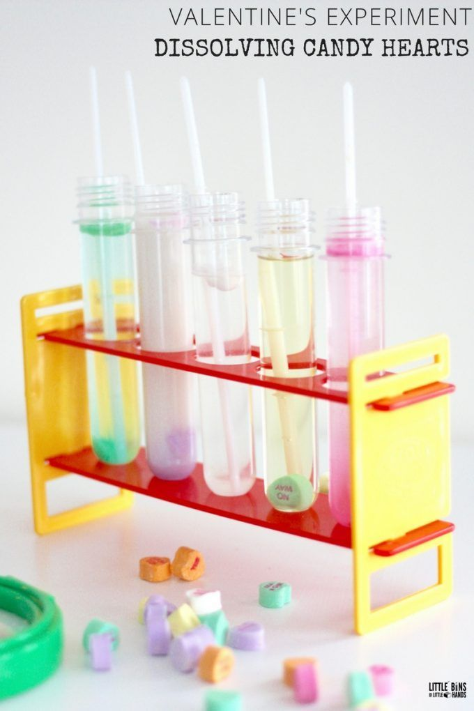 Dissolving candy hearts science experiment for Valentine's Day. Explore solubility and solvents with conversation hearts candy. Fun Valentine's day science with a candy dissolving experiment.