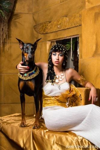 Doberman Chanel London Couture Egypt | Doberman, Doberman ...