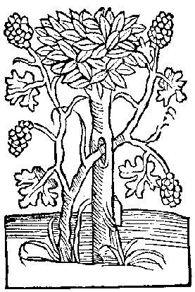 medieval coloring pages feast - photo#23