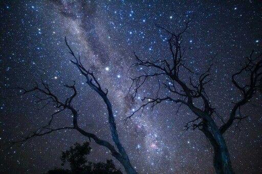 Joyas de la Vía láctea Austral: Alfa y Beta Centauri, La Cruz del Sur junto a las Nebulosas Saco de carbón y Carina