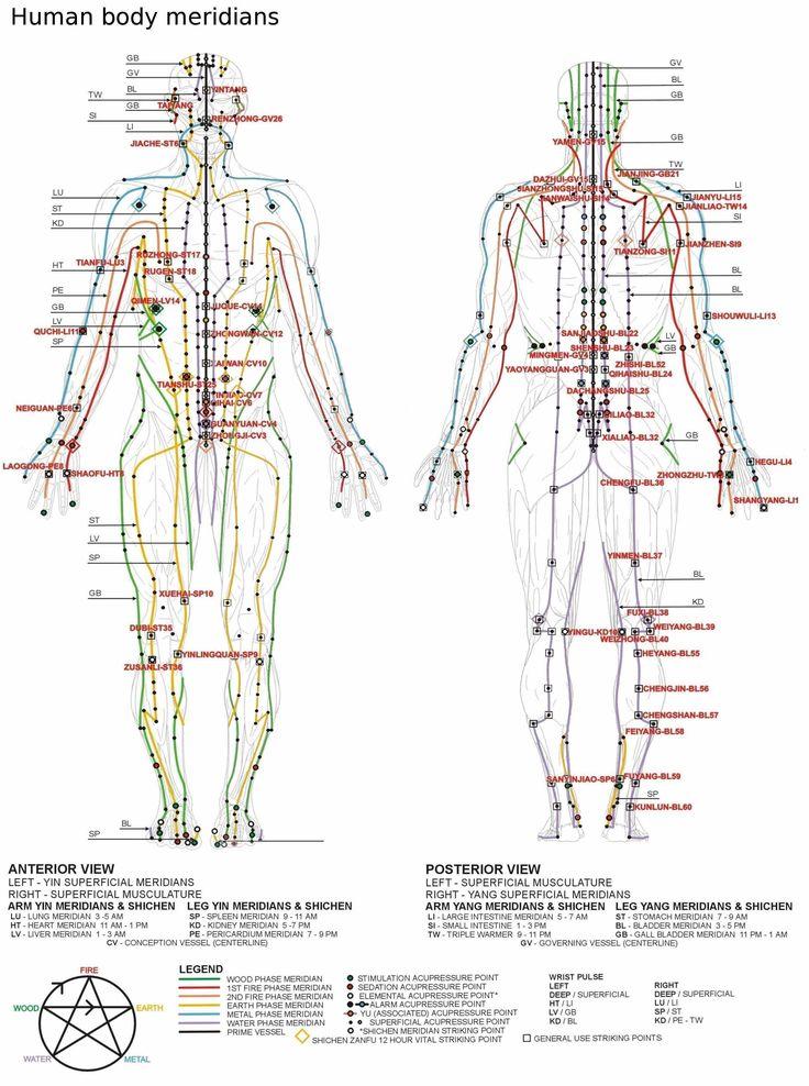 San Jiao Tai | Human Body Meridian Chart & The Nervous System