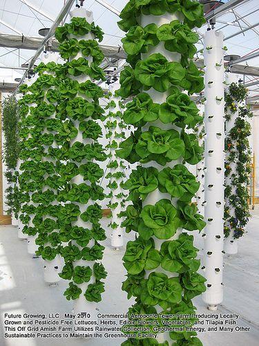 vertical hydroponics. #hidroponia