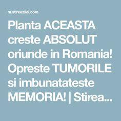 Planta ACEASTA creste ABSOLUT oriunde in Romania! Opreste TUMORILE si imbunatateste MEMORIA! | Stirea Zilei