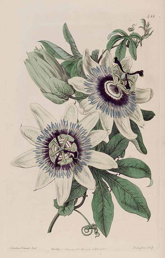 9 best flower images on flower