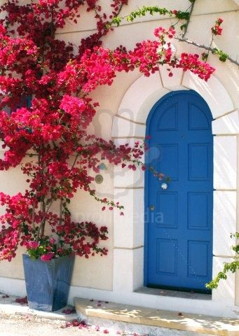 Pink Bougainvillea - boho european design -blue front door and red pink flower bush tree doorway house entrance boho arch moroccan interior design