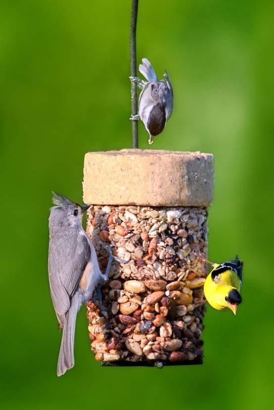 121 Best Bird Feeding Images On Pinterest For The Birds