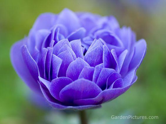 Flower | Deep blue flower picture in desktop wallpaper size 1024 ...