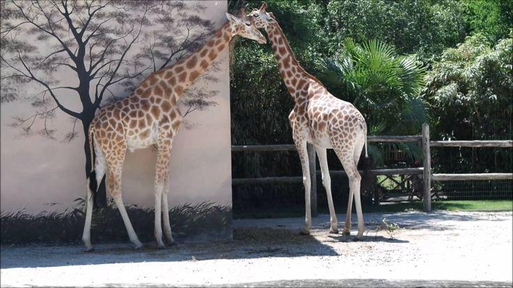  VLOG  Allons au Zoo de La Flèche
