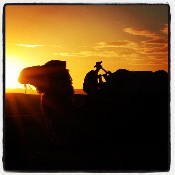 #sunset #morocco #marrakech #sahara #desert #sand #camel #fashionshoot #travel #holiday #vacation