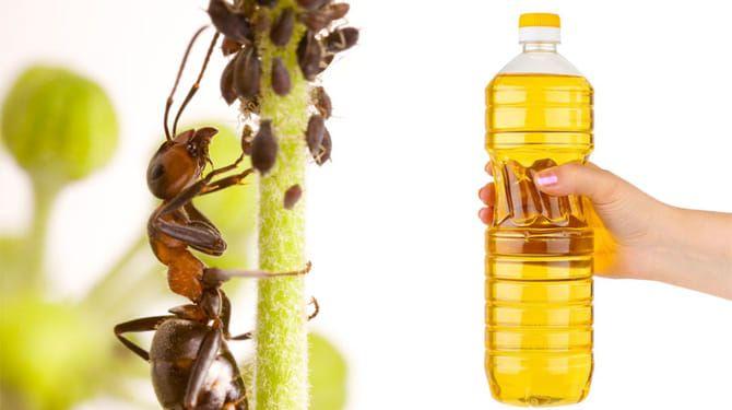 Využite ocot proti mravcom - postriekajte im cestičky alebo celé mravenisko.