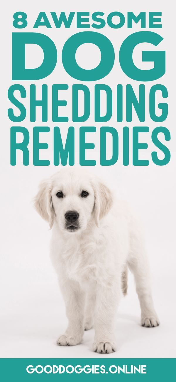 Being a dog parent means having to deal with shedding. But what do you do when the shedding becomes too much? Try these dog shedding remedies!