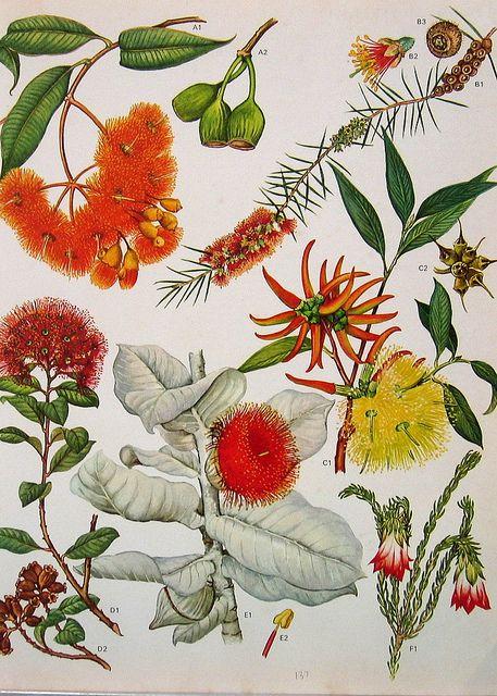 Vintage Flowers Prints 137   Nina   Flickr