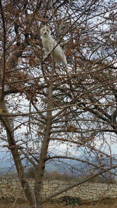 Gattina che si diverte sulle piante Agriturismo Il Portone