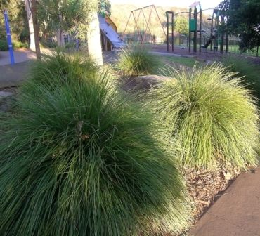 Kidsafe plants for playgrounds
