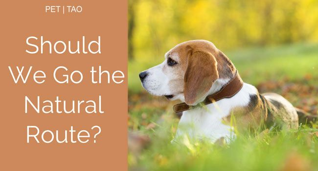Best Dog Food For Dogs With Mast Cell Tumors