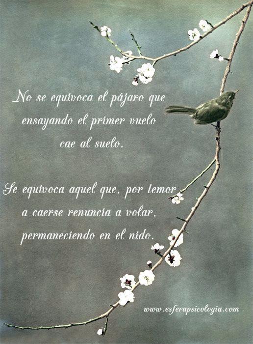 #imagen #pajaro #motivacion