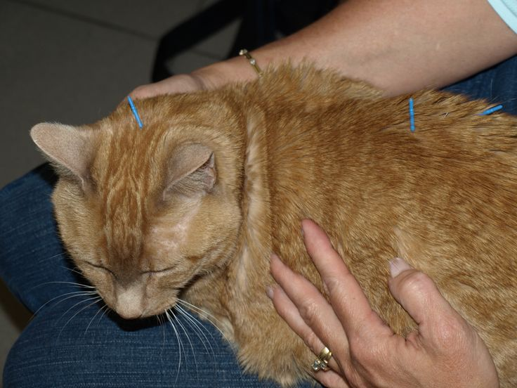Meet Marmalade! Marmalade came to see our acupuncturist