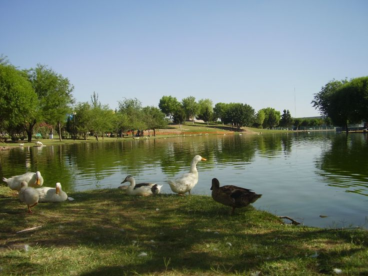 """Central Park. Are you looking for calm? why not trying this out, in """"El parque Central"""" where you can find many animals (Ducks, Turtles, a Giraffe, a Deer, even you can find an Ostrich)."""