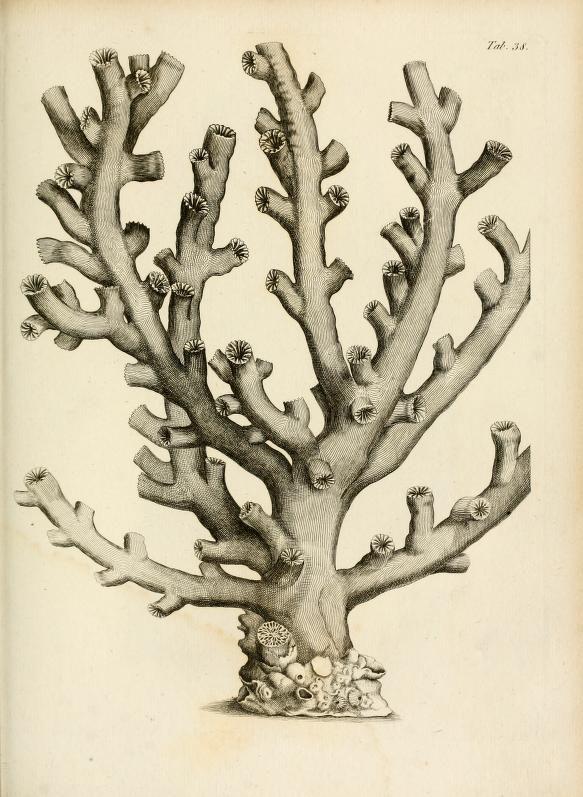 Exposition méthodique des genres de l'ordre des polypiers : - Biodiversity Heritage Library