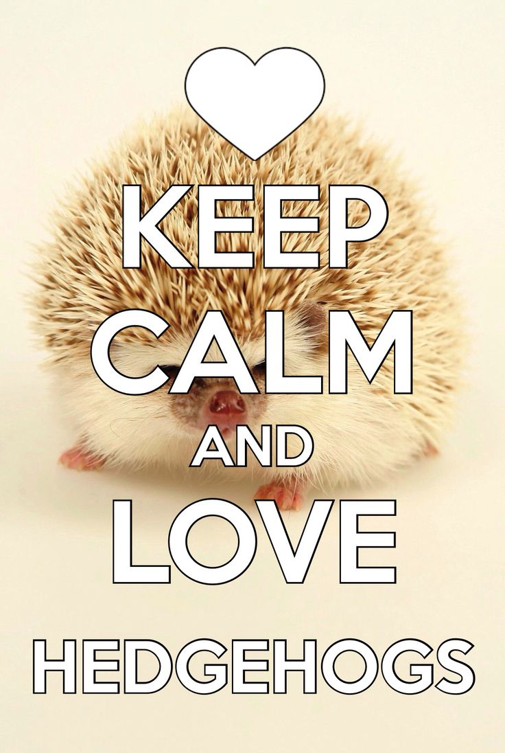 "I don't usually have anything to do with the ""keep calm"" stuff, but who can resist that face?"