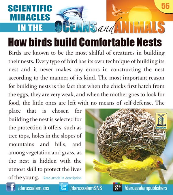 Birds are known to be the most skilful of creatures in building their nests. Every type of bird has its own technique of building its nest and it never makes any errors in constructing the nest according to the manner of its kind. #ScientificMiraclesInTheOceansAndAnimals #DarussalamPublishers #IslamicEBooks #AmazonKindle #KindleStore