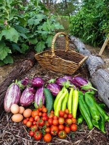 A basket of free produce.  Learn how to grow your own abundant, organic food on a shoestring.