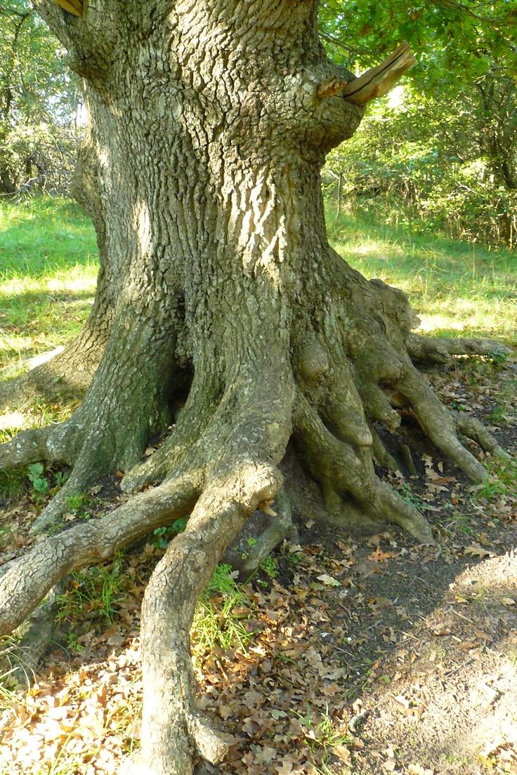 wandelcoaching, de natuur als metafoor!