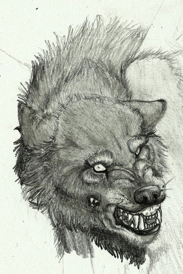 Hell Hound WIP by SinnedWolf.deviantart.com on @DeviantArt