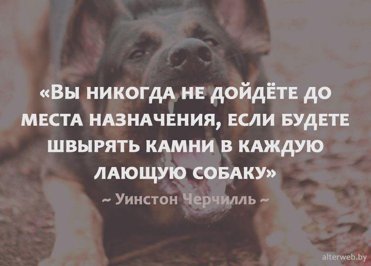 Вы никогда не дойдете до места назначения, если будете швырять камни в каждую лающую собаку  Уинстон #Черчилль  #мотивация #стремление #цитаты #успех #цель #вебмаркетинг