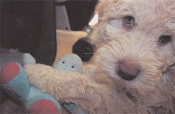 #dog #pup #hugin