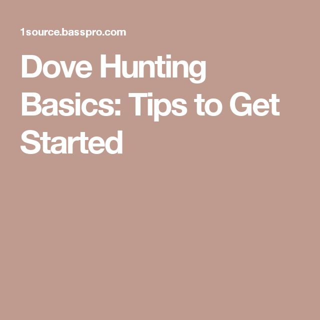Dove Hunting Basics: Tips to Get Started