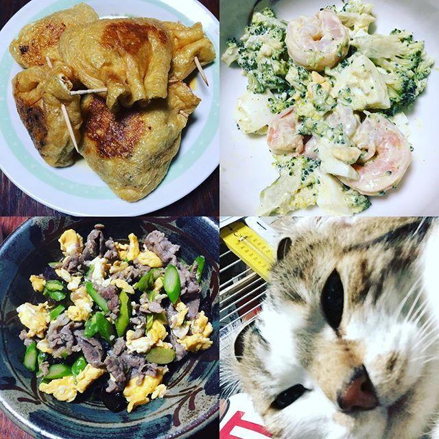 #作り置きダイエット #豚肉と卵とキクラゲ炒め #キムチ納豆チーズ茶巾  #エビのカレーマヨ #愛猫 #直角 #ブサ顔