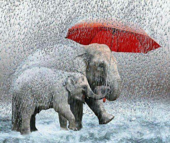 "Just ""singing in the rain ☔ """