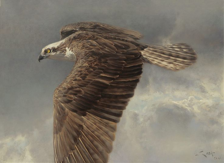 Osprey painting -Flying over the eagle- Prints on canvas