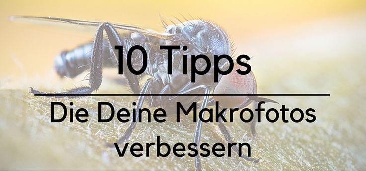 In diesem Beitrag liefern wir Dir 10 wirkungsvolle Tipps, um Deine Makrofotos nachhaltig zu verbessern. Auch lernst Du Focus Peaking und Stacking kennen.