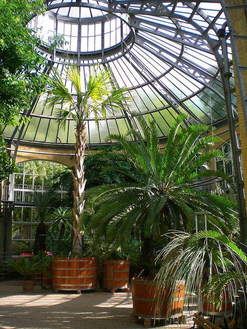 Amsterdamde Hortus Botanicus Warum Haben Sie Keine Palmen In Ihrem