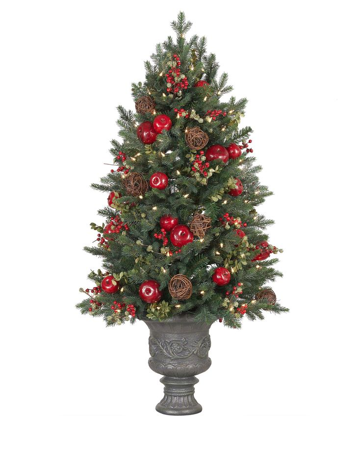 Norway Spruce Potted Christmas Tree
