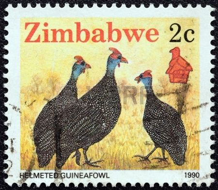Helmeted Guineafowl , (Numida meleagris) . A stamp printed in Zimbabwe, circa 1990