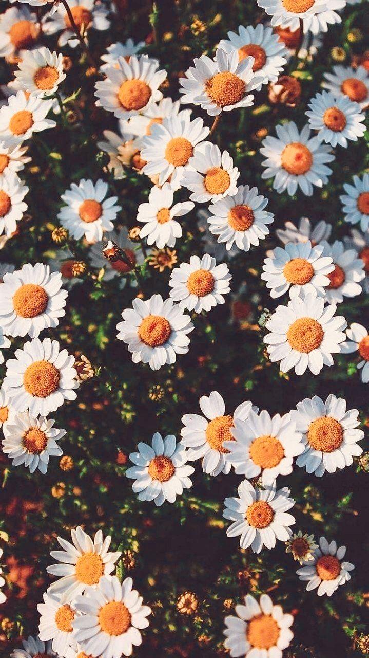 Pin Von Tamires Castro Auf Phone Wallpapers Blumen Hintergrund Iphone Hintergrund Hintergrundbilder