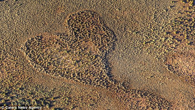 Poliza captured this image of a heart-shaped formation in the Uluru-Kata Tjuta National park, in the Northern Territory of Petermann, Australia, April 2012