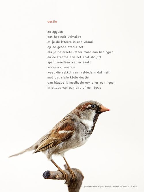 Aan de muur - Poëzieposters voor 14 tot 114 - poëzieposter met gedicht 'Dectie' van Hans Hagen - Plint