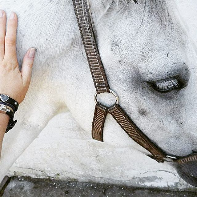 Wwwenjoymentpl horse blogger lovefriend endhappytime workout
