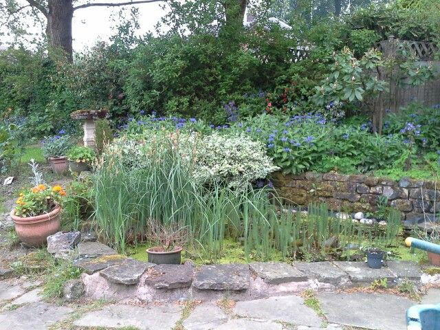 Back garden May morning 2014