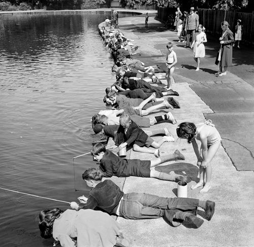 Children fishing in Victoria Park, London 1953 Art Print by Mirrorpix at King & McGaw