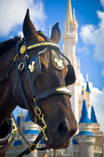 Main Street USA horse