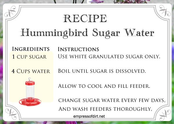 Recipe for making sugar water for hummingbirds - see how to at empressofdirt.net/hummingbird-quiz